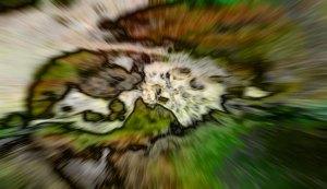 Kundalini dimension