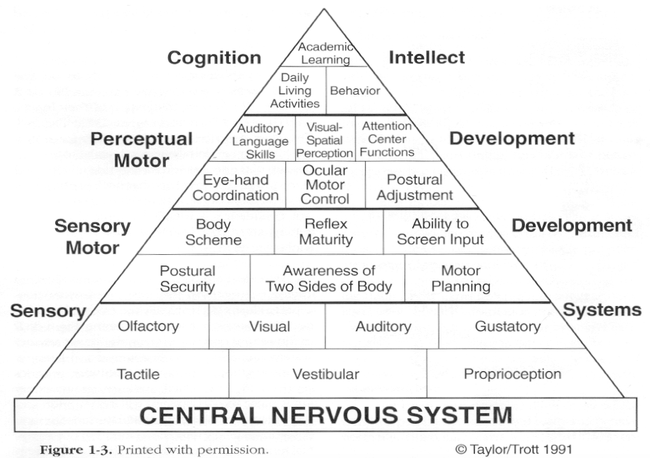 The Behavioural Dimension of Sensing | The Highly Sensitive Family